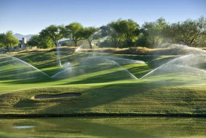 Tưới nước thường xuyên để cỏ luôn xanh tốt