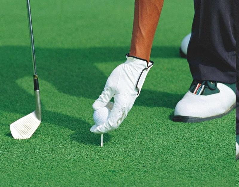 Cỏ Bentgrass được trồng trên sân Golf